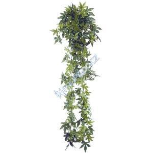 Abutilon plant 100