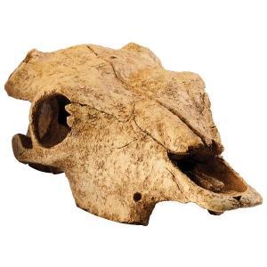 Hagen Exo Terra bůvolí lebka 23,5x13x7 cm