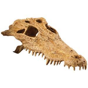 Hagen Exo Terra krokodýlí lebka 22x12x7 cm
