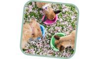 Ilustrační obrázek Miska pre psa, cestovné, BecoBowl Travel-pink M, EKO
