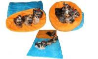 Ilustrační obrázek Pelech MAX - modrá / oranžová