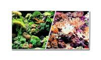 Ilustrační obrázek Pozadí mořské oboustranné