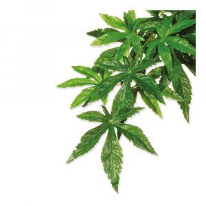 Rostlina textilní Abuliton malá 40 cm